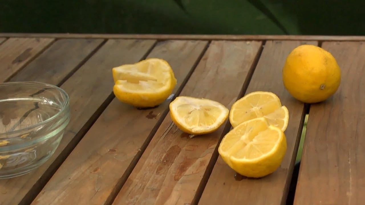How to Grow a Lemon Tree
