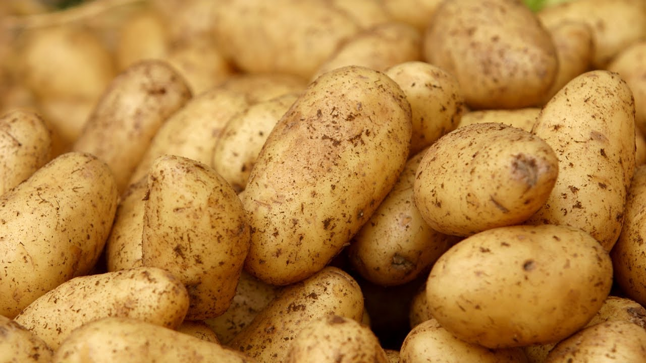 How to Grow Potatoes Anywhere