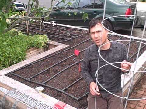 How to Plant 11 Tomato Plants in a Square Foot Raised Bed Garden